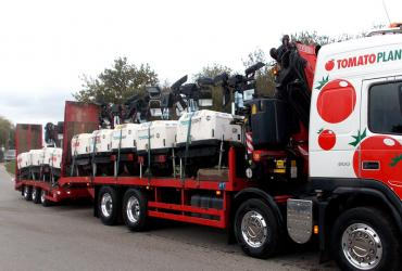 Tomato Plant | Plant Division, Self Loading Rigid to 12T | Iver, Buckinghamshire & London image 10