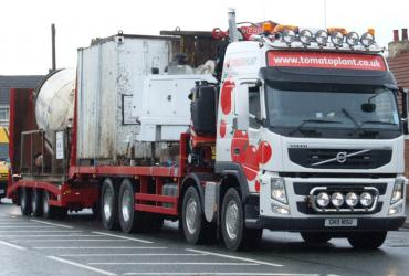 Tomato Plant | Plant Division, Self Loading Rigid to 12T | Iver, Buckinghamshire & London image 11