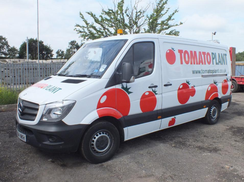 Tomato Plant | Drainage & CCTV Division, Jetting Van Unit | Iver, Buckinghamshire & London large 4