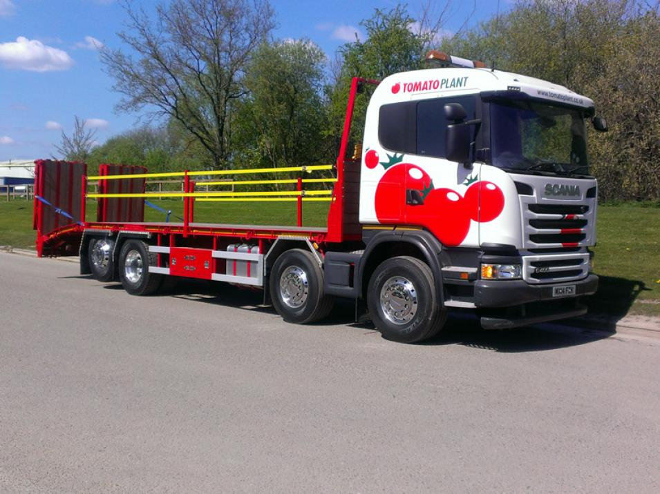 Tomato Plant | Plant Division, Rigid Beavertail to 18T | Iver, Buckinghamshire & London large 1
